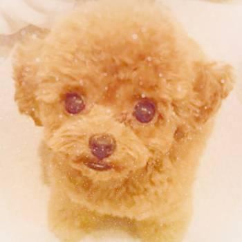 ふわふわ♡(2017/08/18 11:31)塚本 アリサのブログ画像