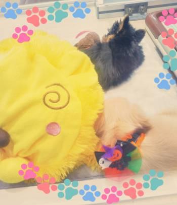 ワンちゃん🐾(2017/10/15 11:15)塚本 アリサのブログ画像