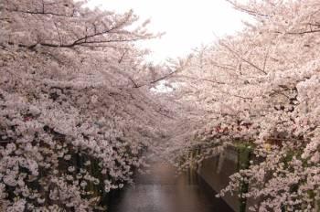 お久しぶりのブログ( •ᴗ•)*♪(2018/04/03 13:16)藤井 咲也のブログ画像