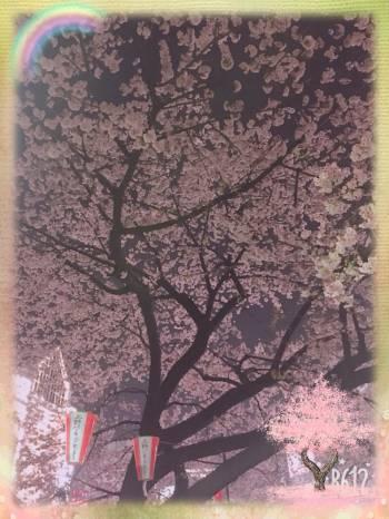 桜🌸🌸🌸(2018/03/17 15:18)早乙女 せなのブログ画像
