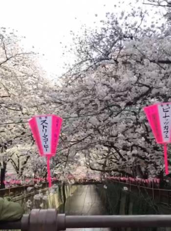 あったかいですね(2018/03/26 12:49)黒沢 カレンのブログ画像