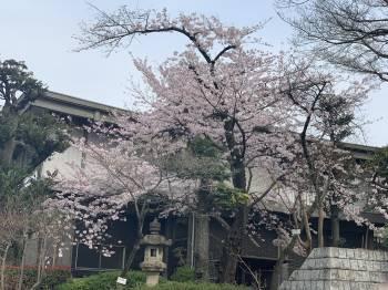 代官山(2020/03/23 15:16)里中 りさのブログ画像