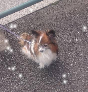 可愛い犬♥️(2020/10/22 12:24)佐々木 まりあのブログ画像