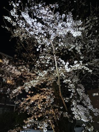 4月ですね🌸(2021/04/04 10:33)小泉 あんずのブログ画像