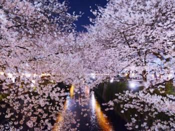 お久しぶりです♪(2020/03/31 11:14)玉川 やよいのブログ画像
