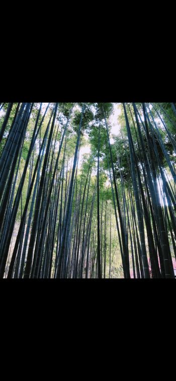 鎌倉(2018/04/12 11:51)唯川 心のブログ画像